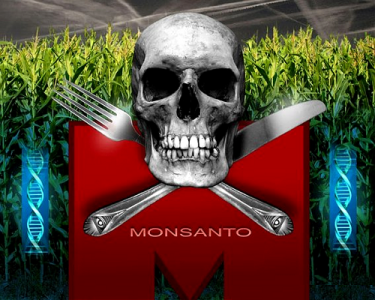 monsantotransgenicos