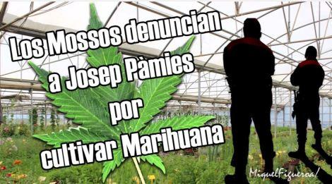 Los Mossos denuncian a Josep Pàmies por cultivar marihuana